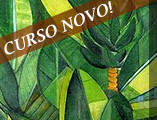 curso_box_identidade_brasileira2